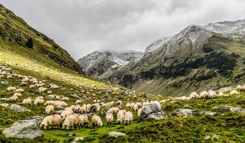 A lush green valley under stormy skies in-between mountain ranges with roaming sheep