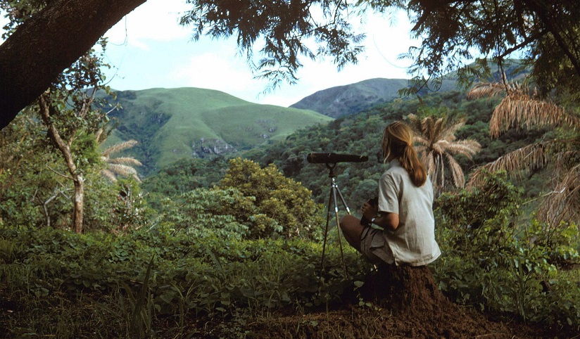 Photo of Jane Goodall overlooking the jungle from a hill top with binoculars
